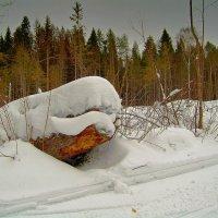лесной КАШАЛОТ...)) :: Владимир Хиль