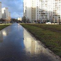 Весна в декабре :: Людмила Монахова
