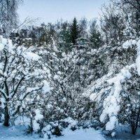 Зимние дачи :: Мария Богуславская