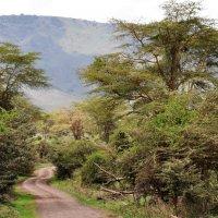 Танзания. По дорогам Нгоронгоро. :: Елена Савчук