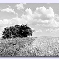Лето :: Виктор Истомин