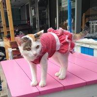 Нарядная тайская кошка )))) :: Елена