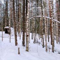 Зимний лес :: Галина Новинская