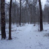 Попытка №2 зимы в Москве. Неудачная. Ждем №3 :: Андрей Лукьянов