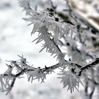 Снежные иголочки :: Elena N