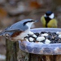 на пару :: linnud