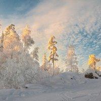 Зимняя сказка :: vladimir