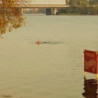 пловец :: Юрий Новичков