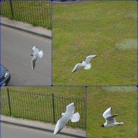 Птицы :: Ирина Тесцова
