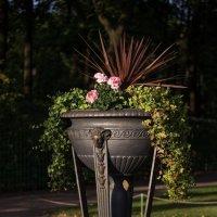 Летний сад :: Алиса Колпакова