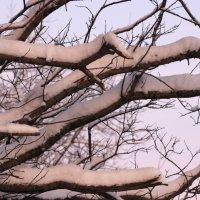 Зима в нежных тонах :: Виктория Браун