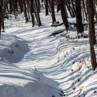 Полосатый лес :: Евгения Корнилова