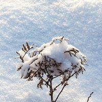 Снег пушистый навалил :: Анатолий Иргл