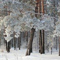 Зимний лес :: Елена ))