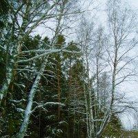 Зимняя палитра... :: Владимир Хиль