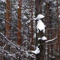 снежный дятел :: Елена Шаламова