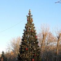 Декабрь,ёлка в парке... :: Тамара (st.tamara)