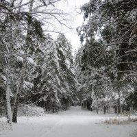 Зима в лесу . :: Мила Бовкун