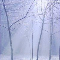 Первые заморозки... :: Nina Streapan