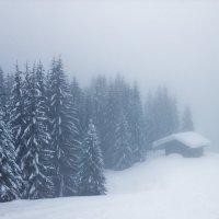 Альпийские туманности! :: Артем