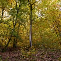 Осень в горах :: Valeriy(Валерий) Сергиенко
