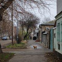 В Таганроге зима :: Константин Бобинский