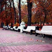 красная осень :: Владимир Гулевич