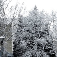 Зима :: Геннадий Храмцов