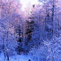 Морозное утро. :: alek48s