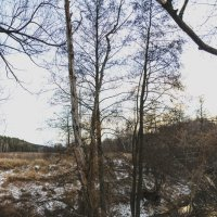 Дерево :: Константин Сафронов