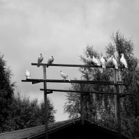 птицы мира... :: Natali-C C