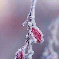 Скованны первым дыханием зимы :: Gleipneir Дария