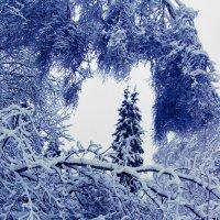 Зима в Малаховке :: Олег Пучков