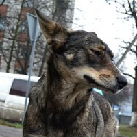 «Застенчивый пёс» :: Aleks Nikon.ua