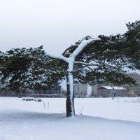 Старое дерево в парке :: Наталья Литвинчук