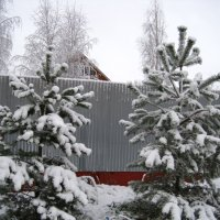 Две  снежные красавицы :: Елена Семигина