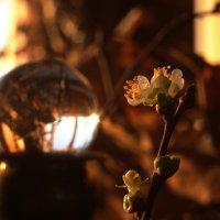 Моя маленькая весна.. :: Ирина Сивовол
