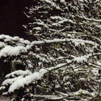 И выпал снег :: Константин Сафронов
