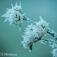 В царстве Снежной королевы :: Yelena LUCHitskaya