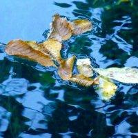 Листья Голубого озера. :: Alexey YakovLev