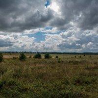 Украина. Черниговская область. Август 2015 год. :: Артём Шкляр