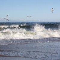 Шторм и чайки.. Балтика. :: Elena N