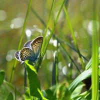 В  траве  лесной :: Геннадий С.