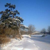 Зима :: Мария
