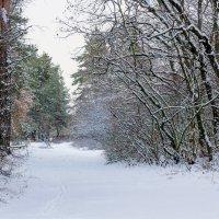 Утро в лесу :: Юрий Стародубцев