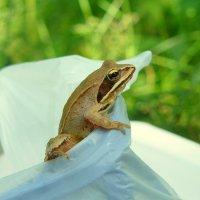 лягушонок в пакете :: Александр Прокудин