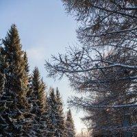 Зима пришла :: Евгений Мельников