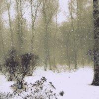 парк Горького зимой :: Ольга Назаренко