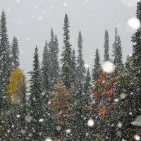 Первый снег :: Сергей Чиняев