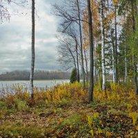 Даниковское озеро.Пасмурный день :: Валерий Талашов